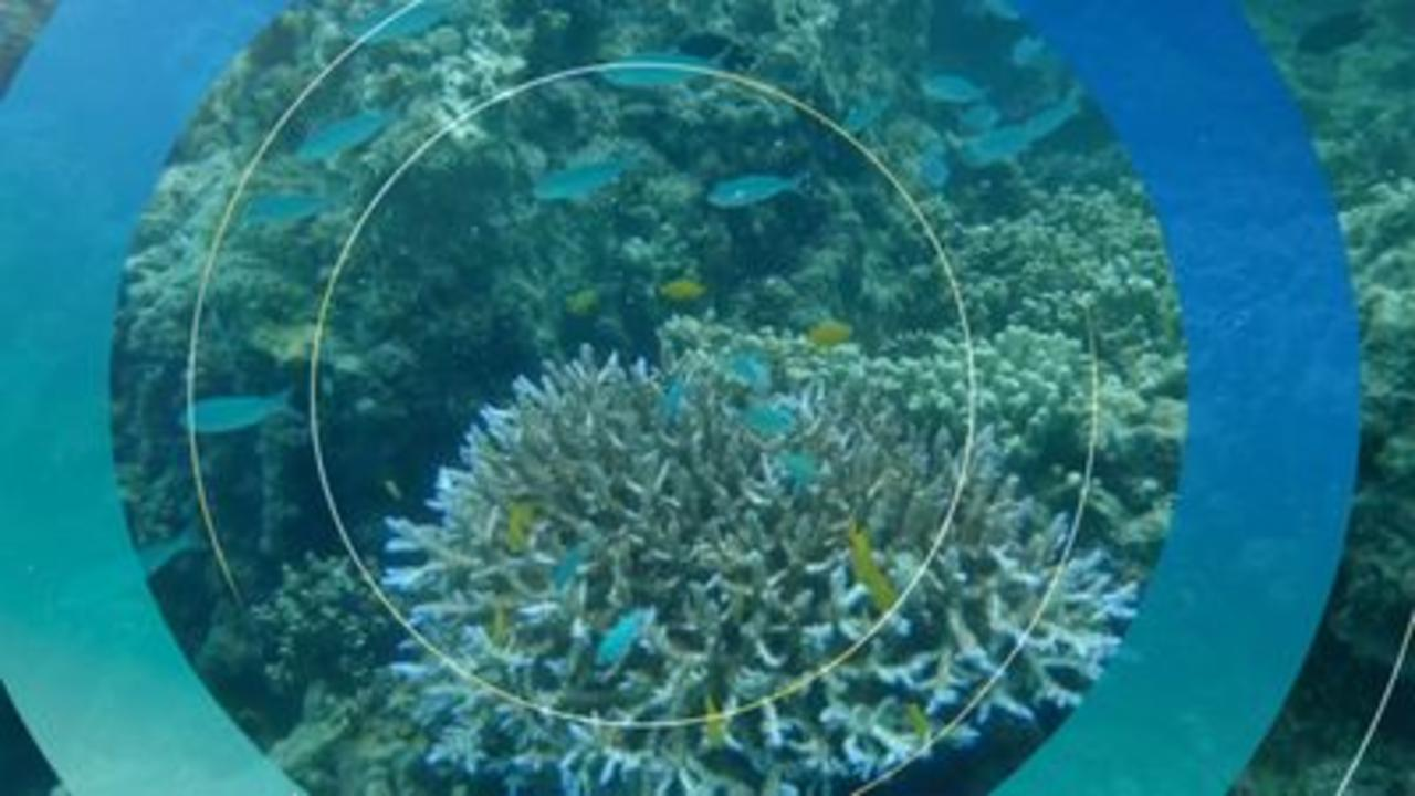 Why is the Great Barrier Reef 'in danger'?