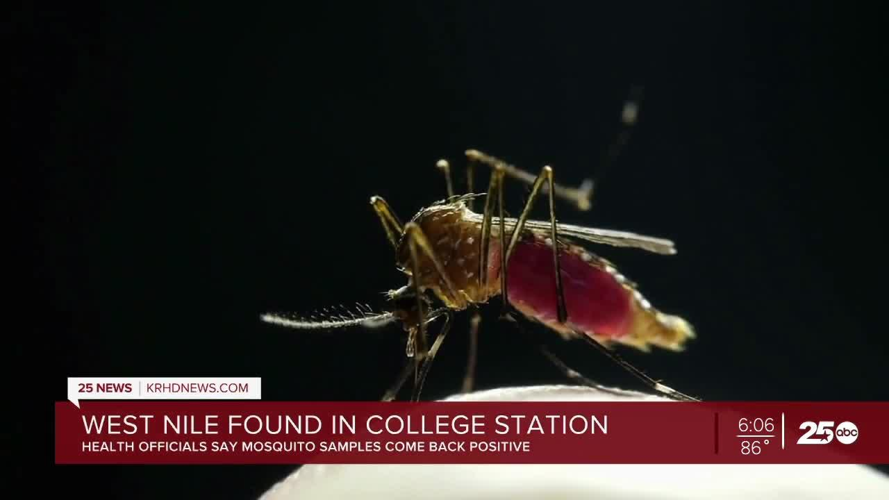 Mosquito sample tests positive for West Nile Virus in Brazos County