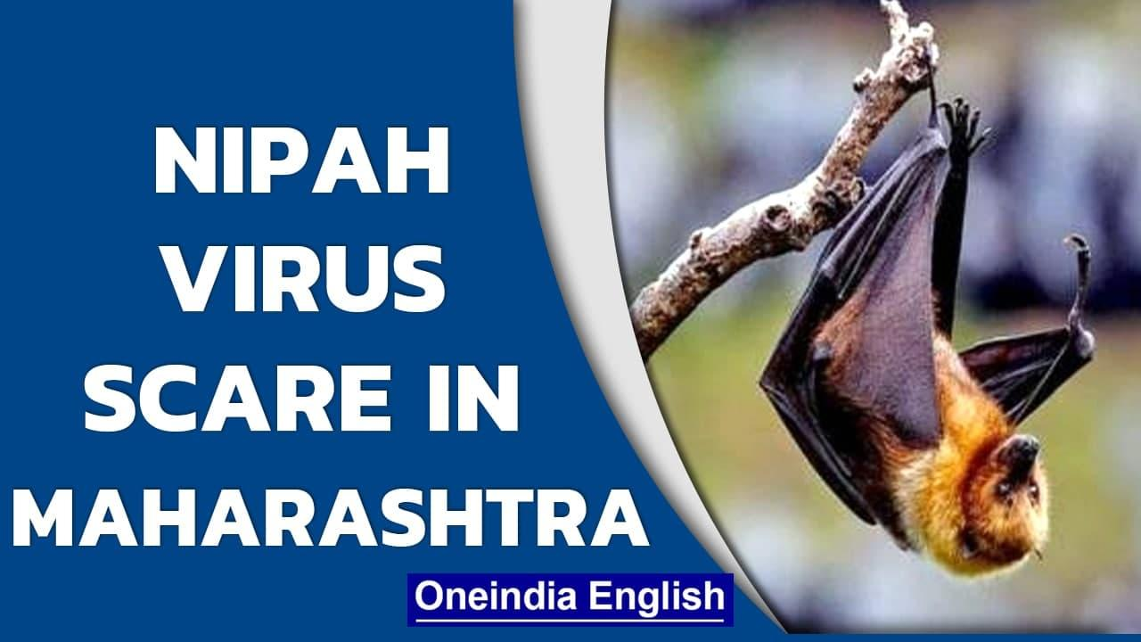 Nipah virus scare in Maharashtra after bats found with antibodies   Oneindia News