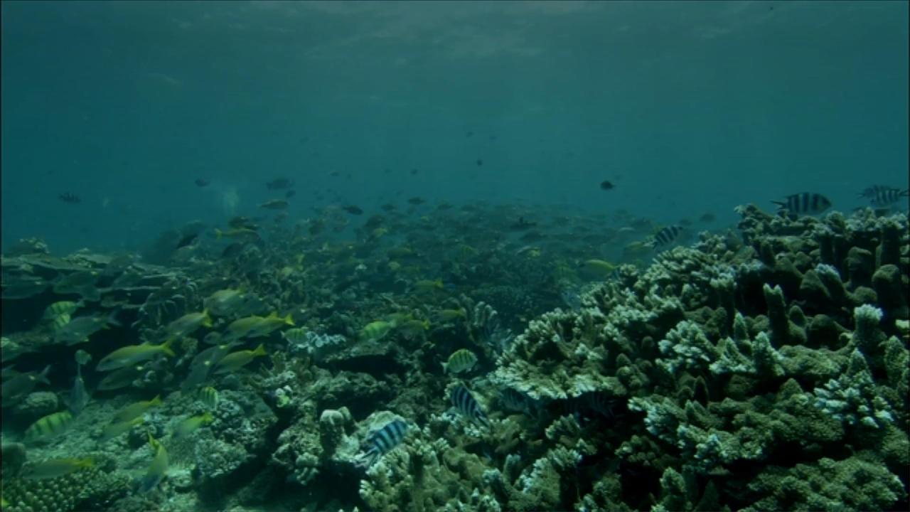 Australia Rejects UN Climate Warning Concerning Great Barrier Reef