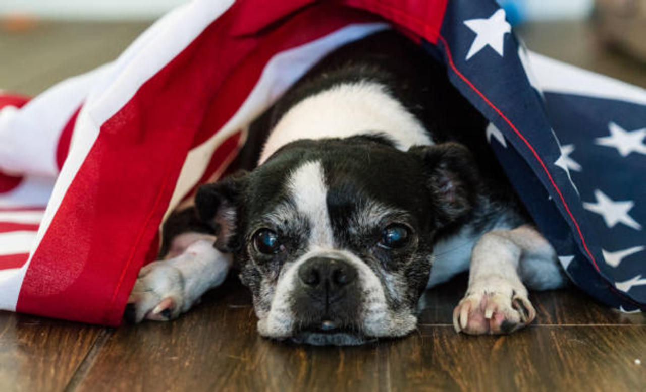 6 Tips to Reduce Your Dog's Stress During the 4th of July