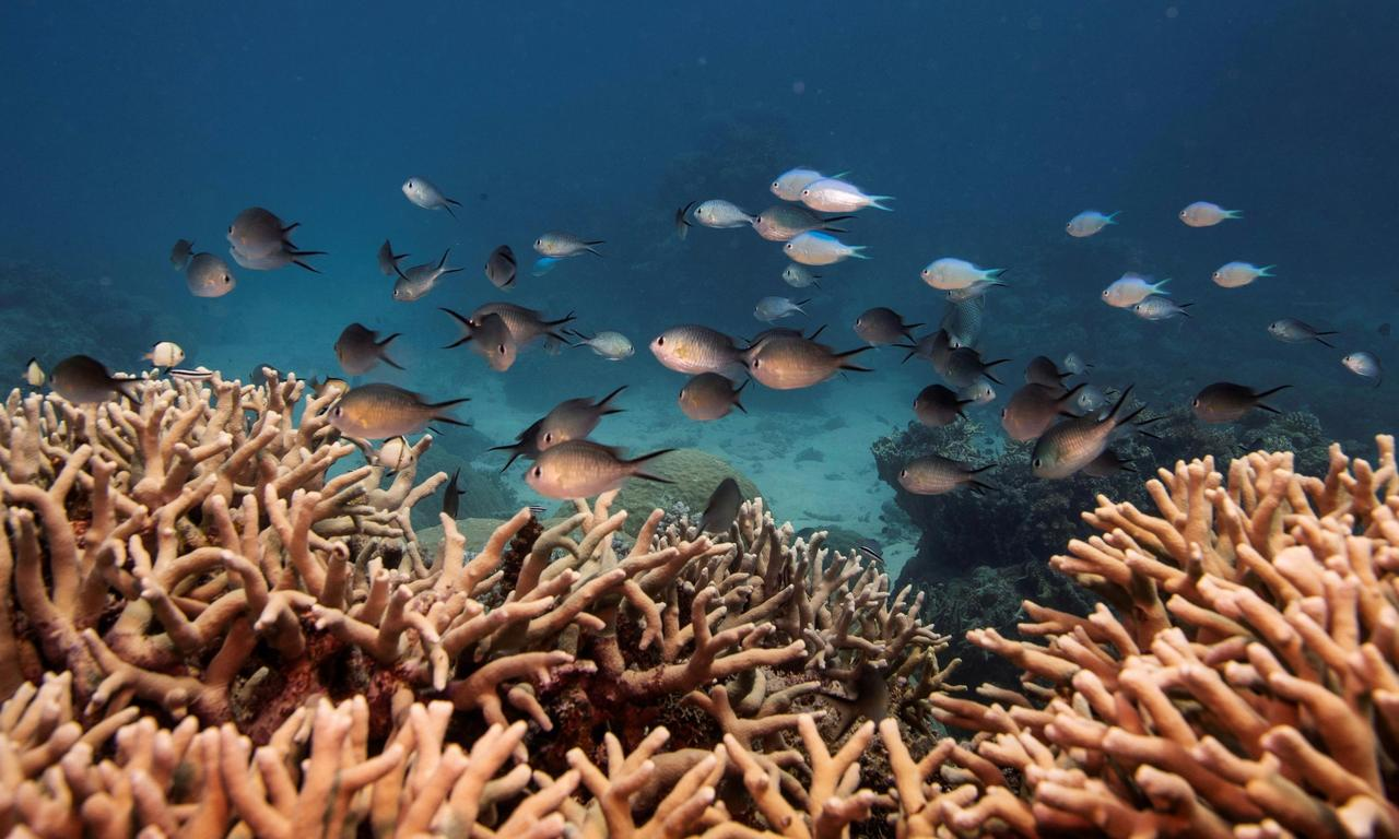 Unesco and Australia dispute Great Barrier Reef's 'in danger' status