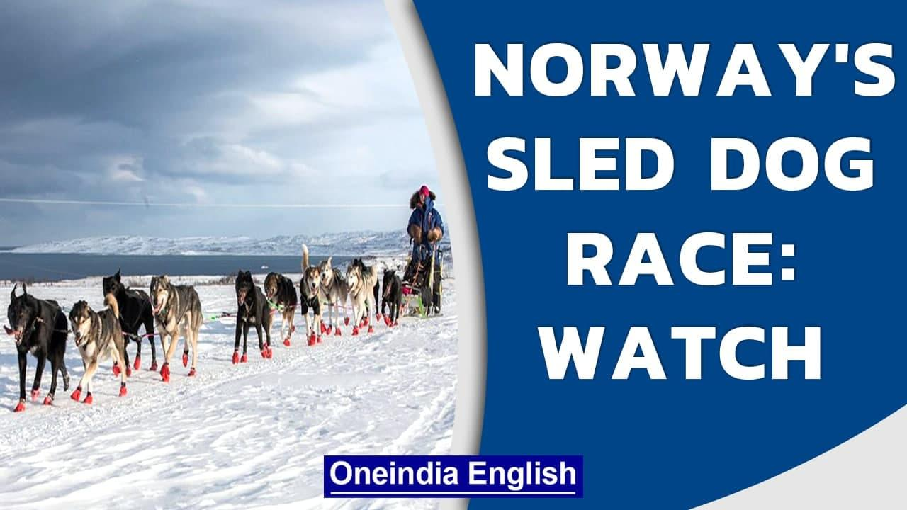 Sled Dog Race - Norway's Arctic Challenge for humans and animals alike | Oneindia News