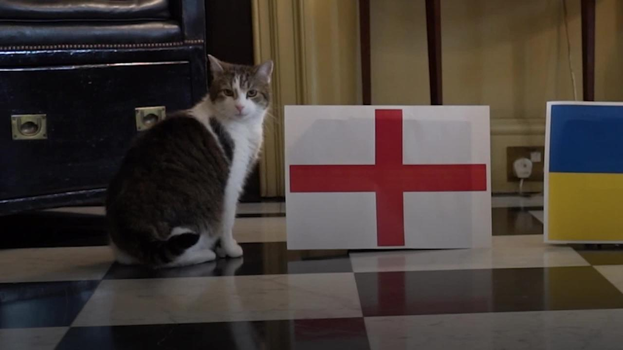 Happy as Larry: Downing Street cat predicts victory for England against Ukraine