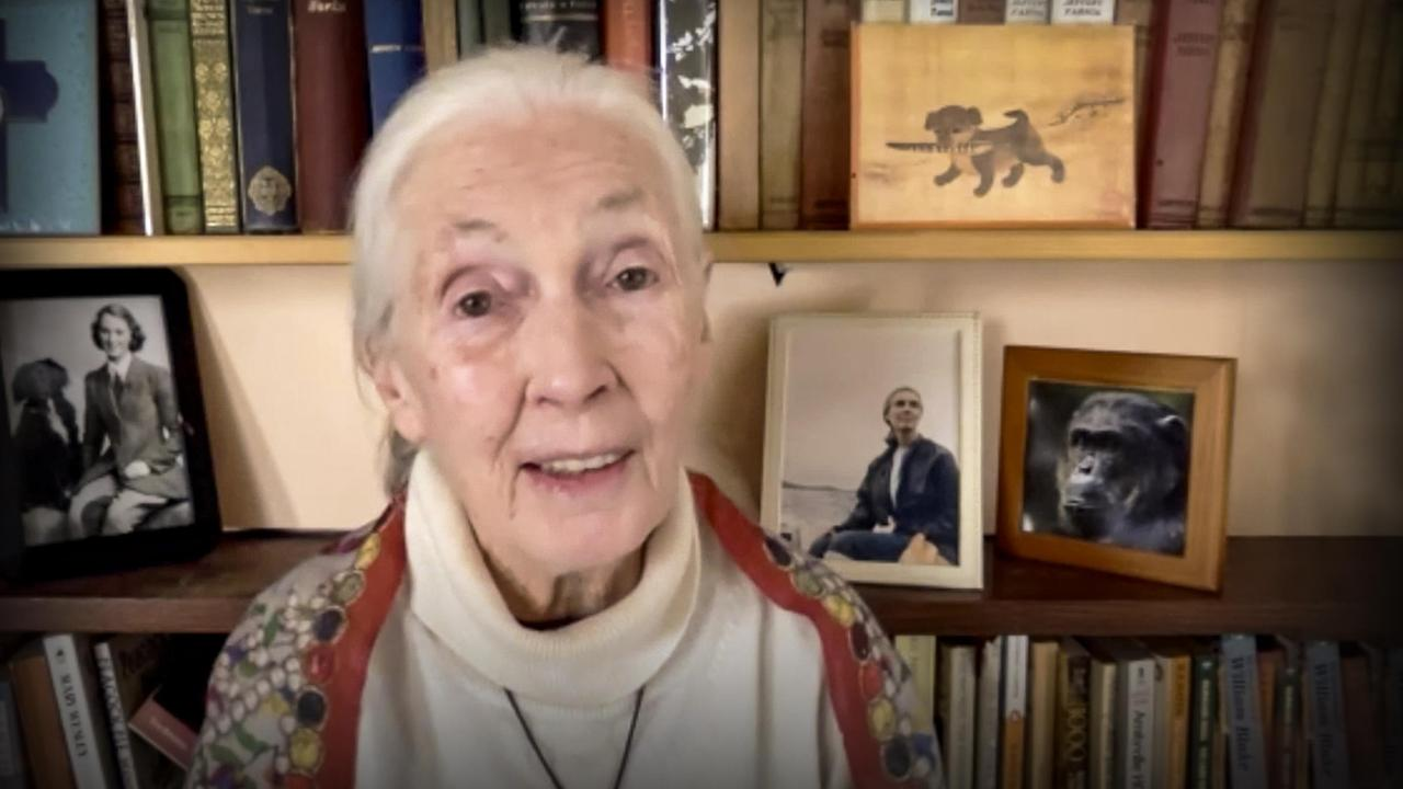 Every day you live, you impact the planet | Jane Goodall
