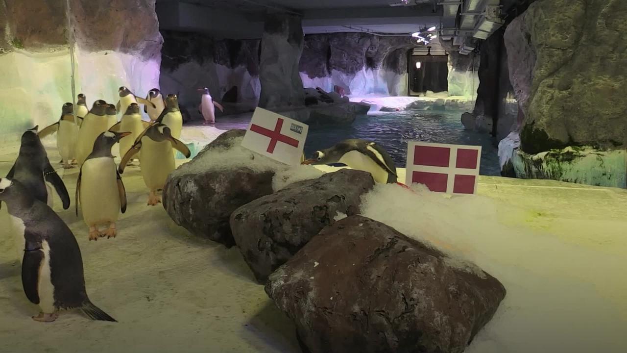 Penguins predict England win over Denmark