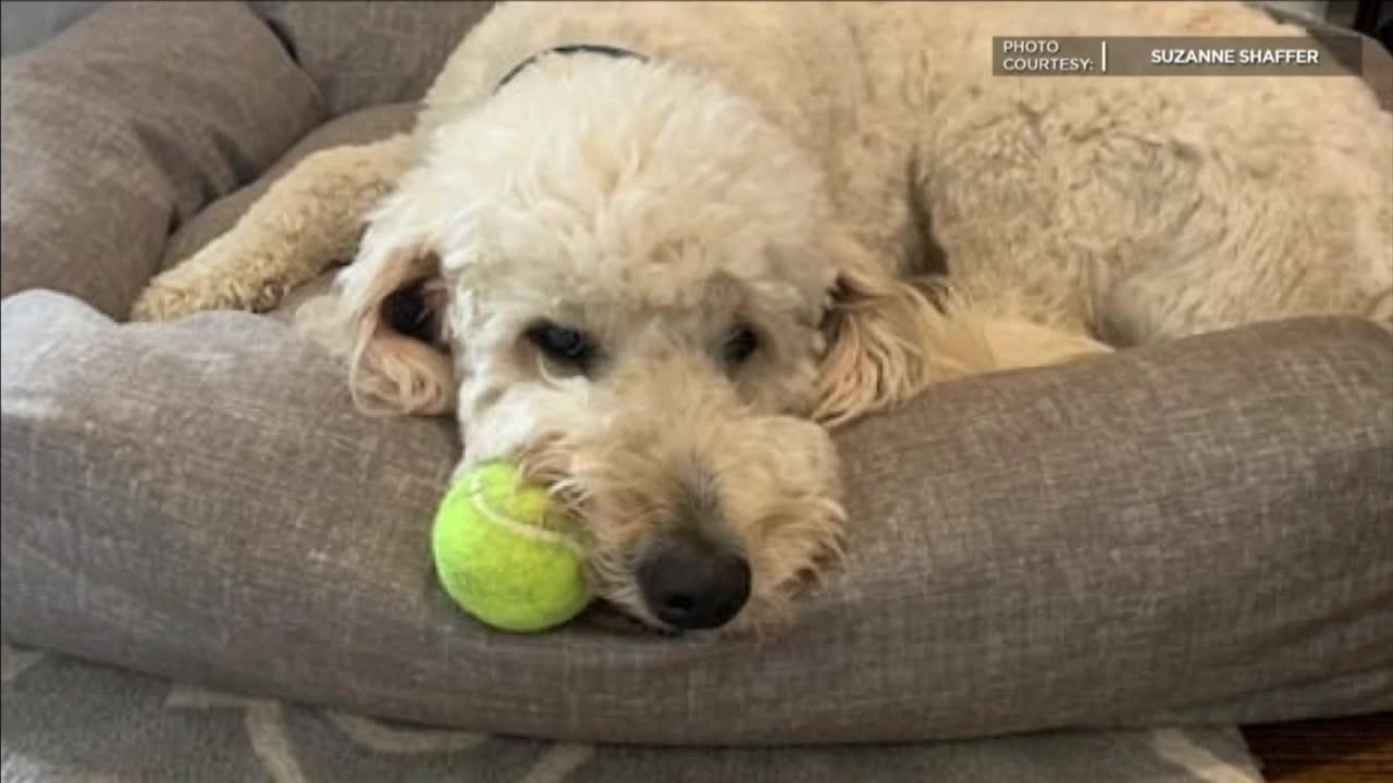 Dog inside stolen car found
