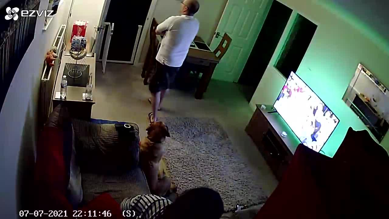 Dog goes wild watching England win in extra time with his dad