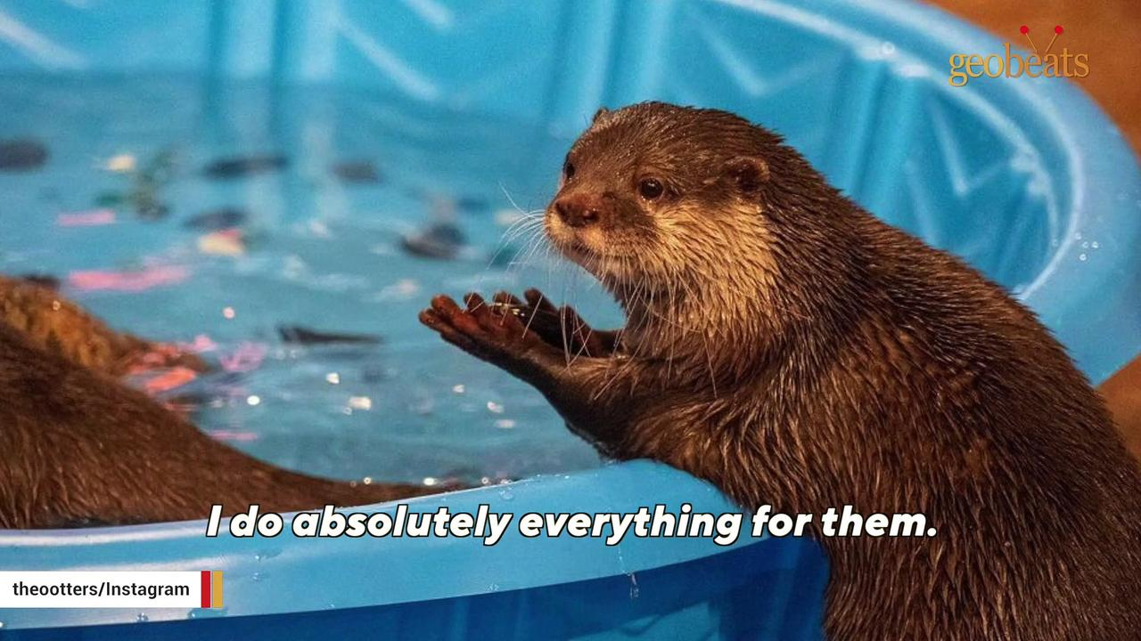 Woman adopts otters instead of having kids