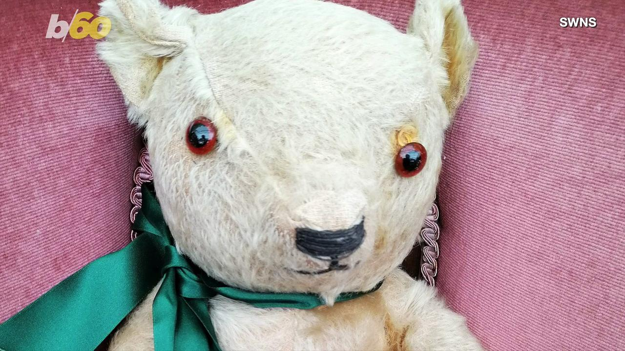 This Bear Survived WWII and is Looking for a New Home