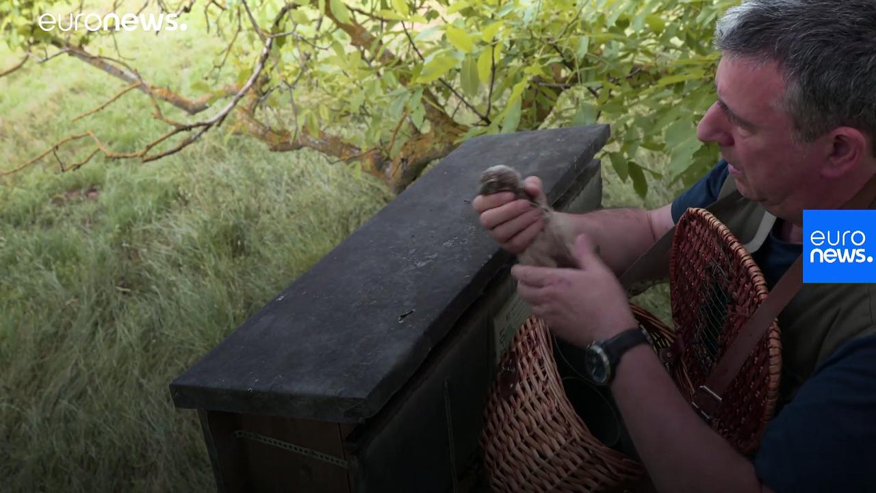 Meet the volunteer helping to save endangered birds in France's Alsace region