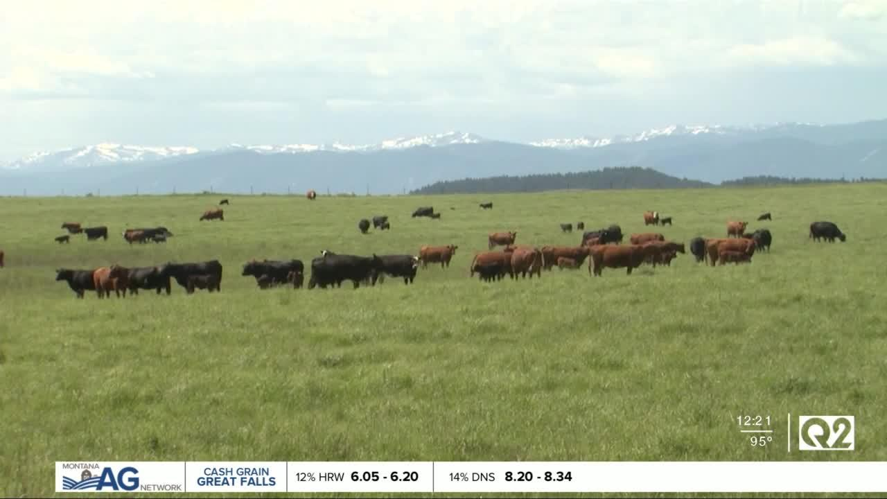 Montana Ag Report II 7-19-21