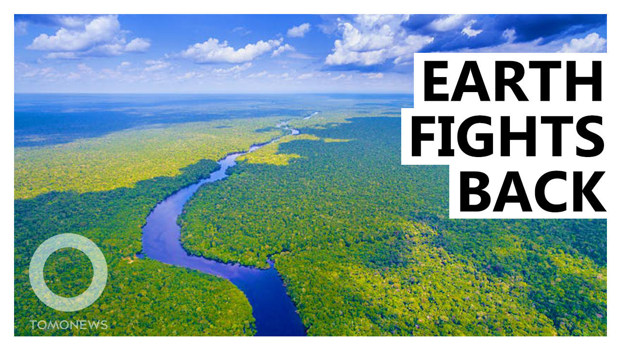 Amazon Went From 'Carbon Sink' to Carbon Polluter