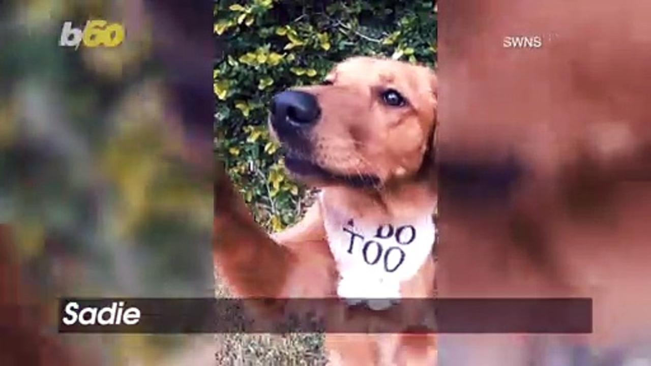 Check Out This Funny Ring-Bearing Dog Run Amok at a Couples' Wedding!