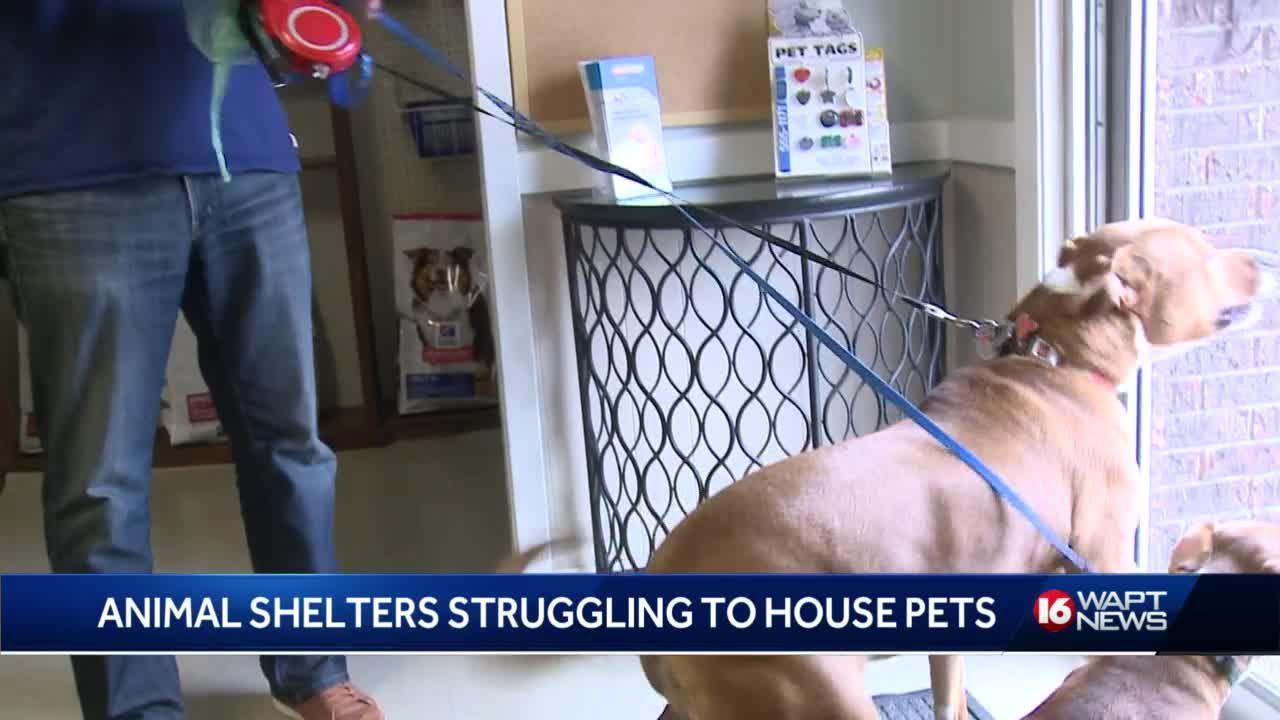 Animal Rescue Groups Pushed to the Limit