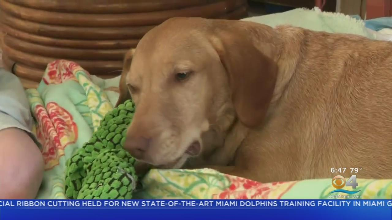 Teddy, The Crisis Response Canine, Flown Home On Private Jet