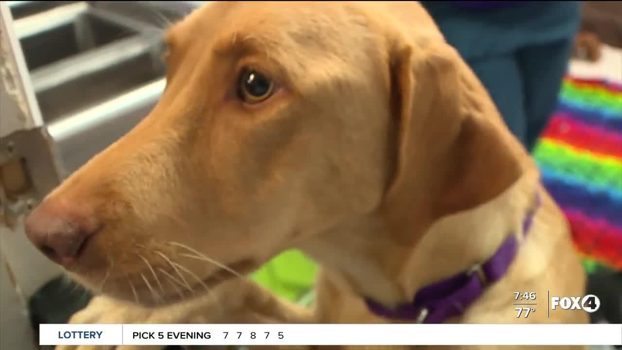 Help Wanted: Gulf Coast Humane Society hiring Kennel Techs & Adoption Counselors