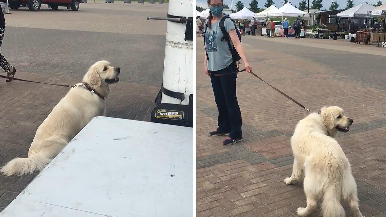 Golden Retriever throws tantrum after getting treats from food truck