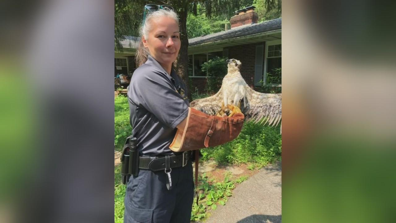 Animal Control Officer Rescues Osprey In Harford County