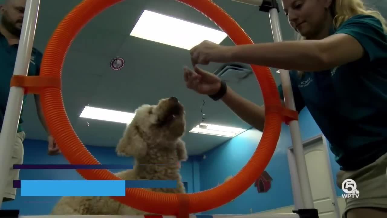 'Doggie Olympics' held in Jupiter