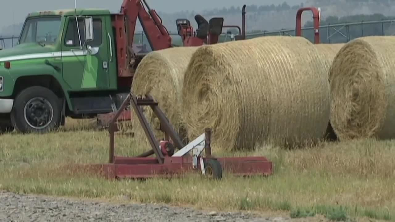 Montana growers navigating hay shortage during drought