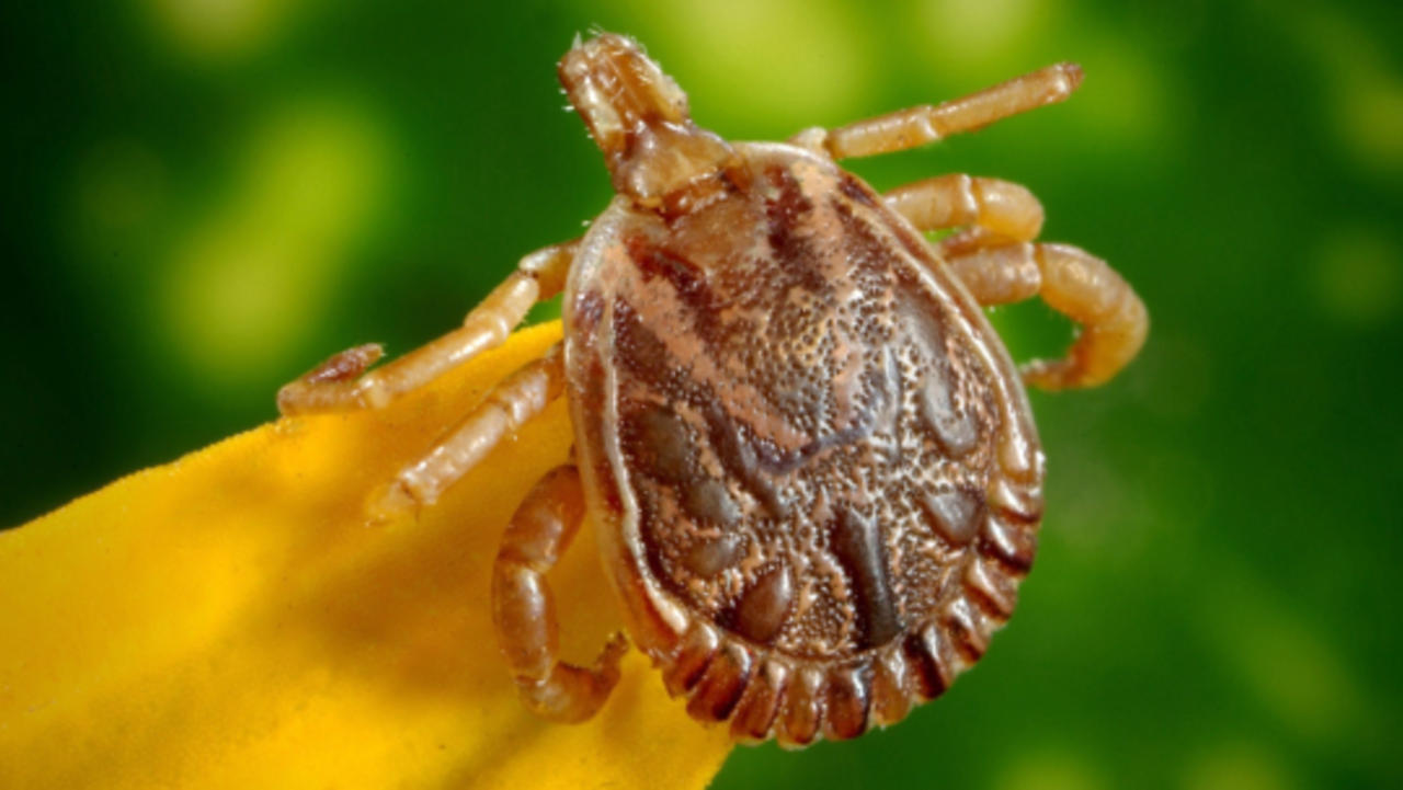 How To Prevent Tick Bites and When To Go See Your Doctor if You Get One