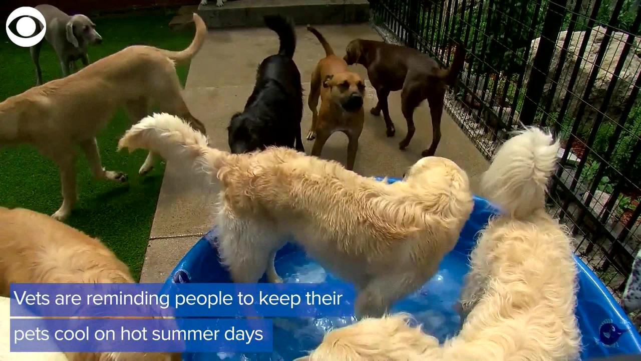 WEB EXTRA: Pets And Heat Safety