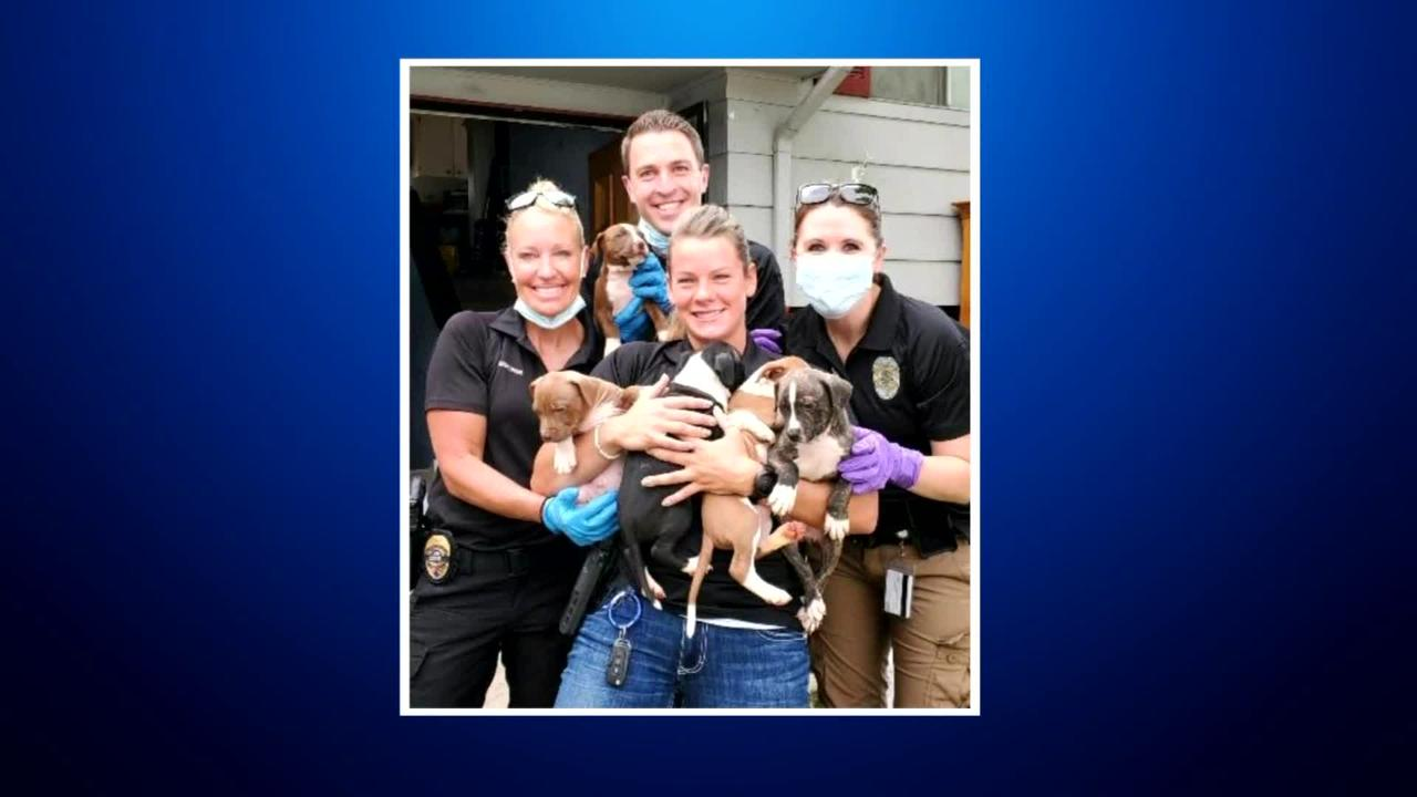 Drug Investigation Turns Into Puppy Rescue For Arvada Police