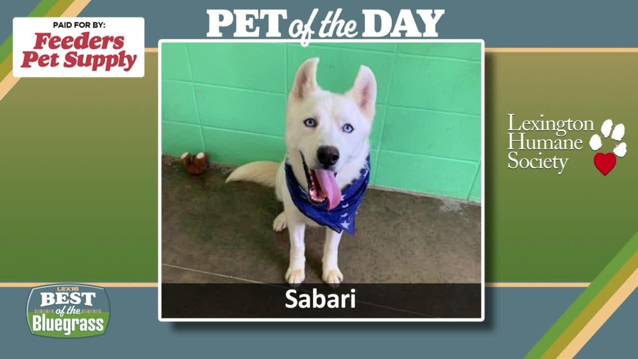 Pet of the Day: Sabari