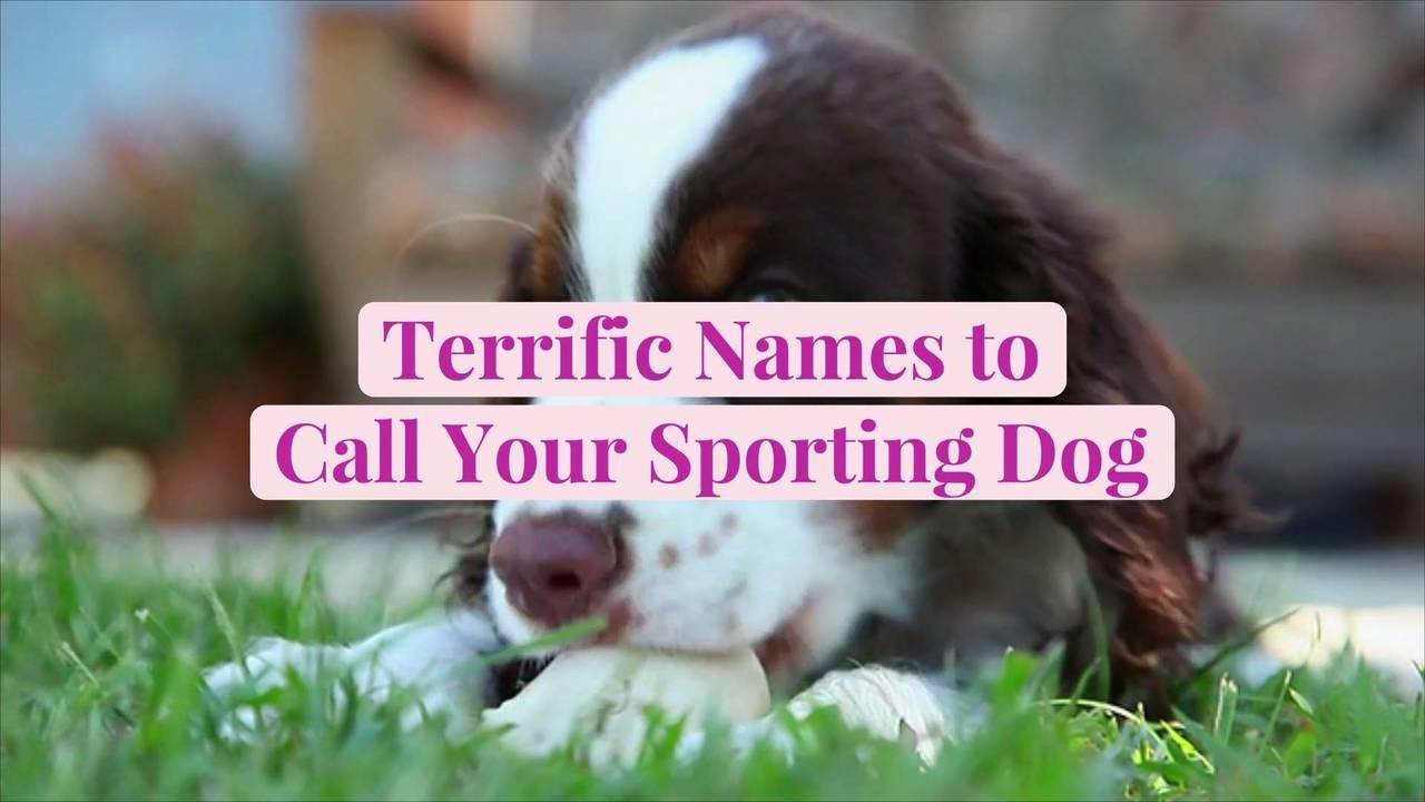 50 Terrific Names to Call Your Sporting Dog