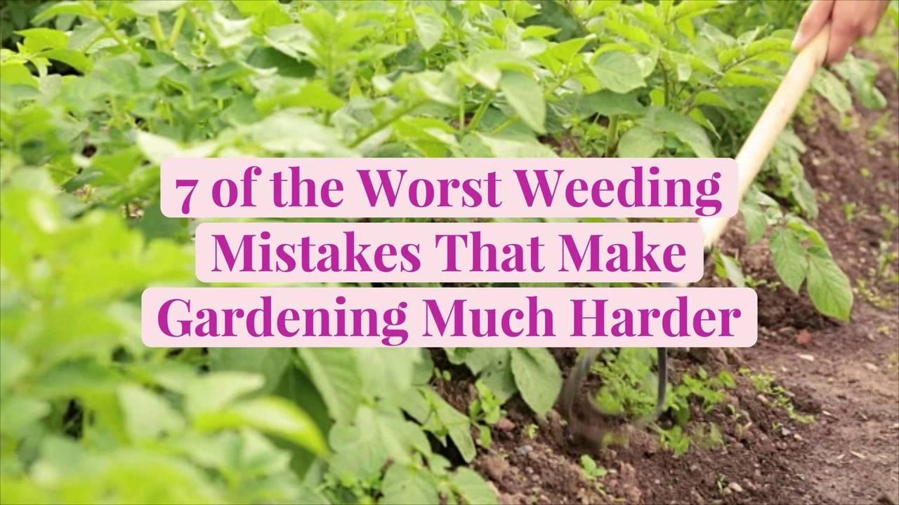 7 of the Worst Weeding Mistakes That Make Gardening Much Harder