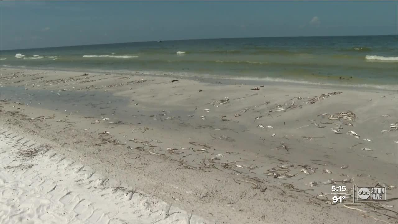 Doctors see an influx of patients with red tide irritant symptoms