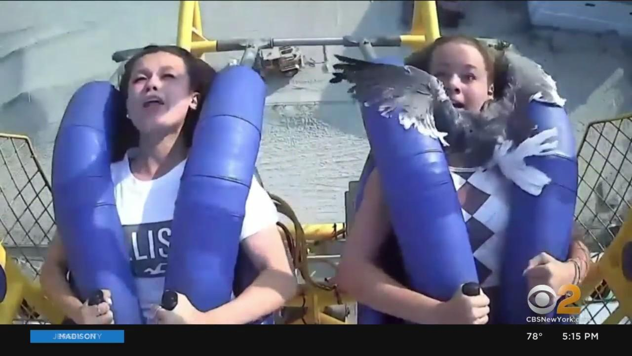 Teen Describes Viral Encounter With Seagull On Wildwood Slingshot