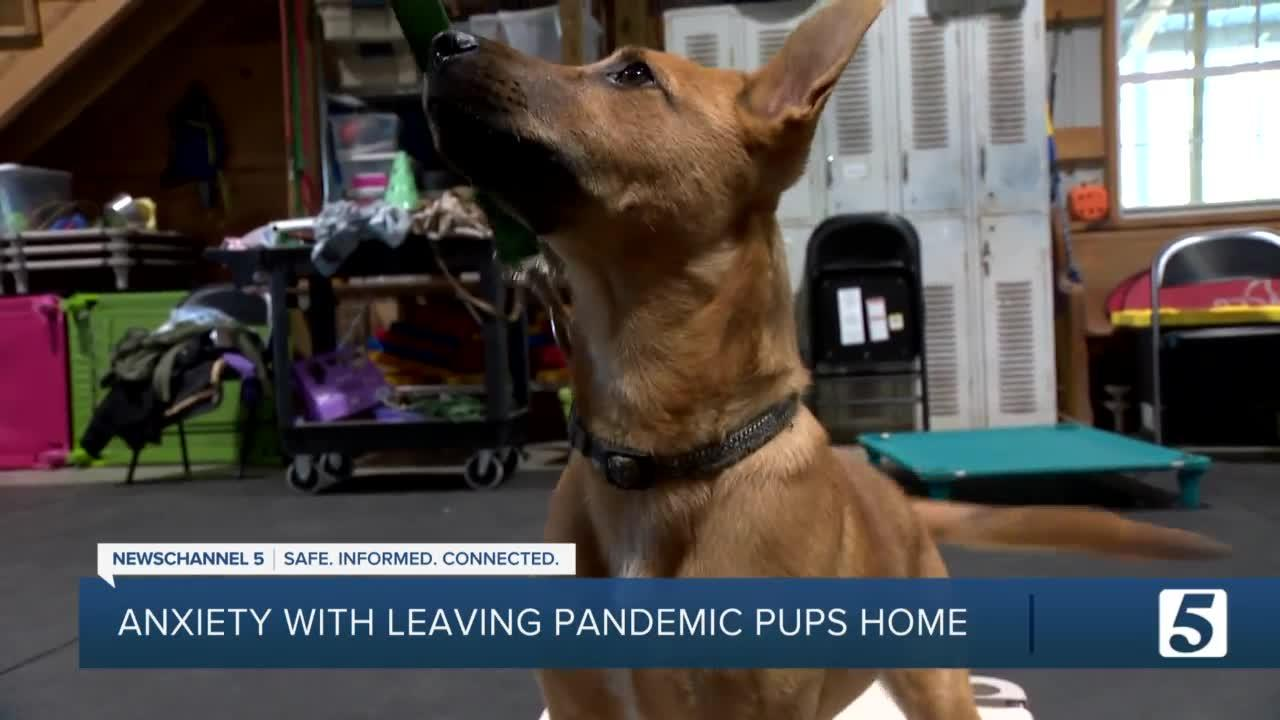 Does your pet need help adjusting to being home alone? Try these 3 tips.