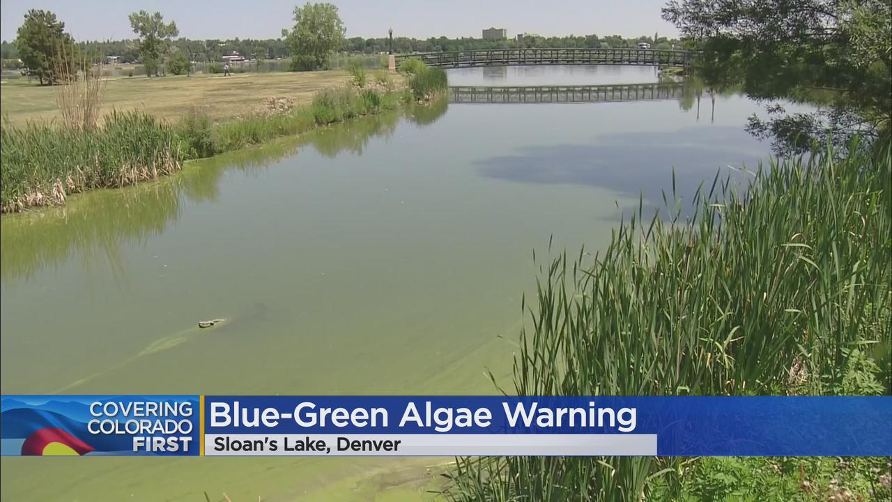 Sloan's Lake Has Been Closed Due To Blue-Green Algae