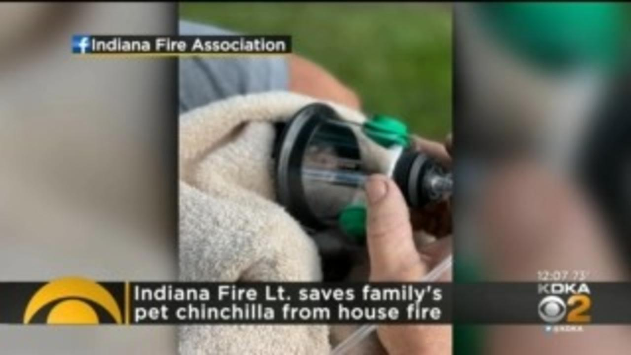 Fire Crews Rescue Pet Chinchilla From Burning Home