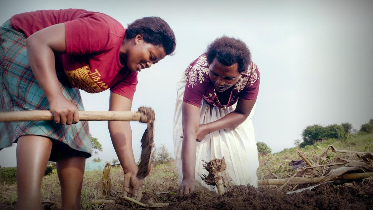 The seeds of change helping African farmers grow out of poverty   Andrew Youn