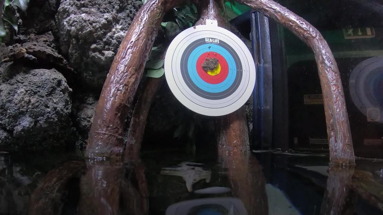 Fish at Sea Life London hit bullseye as they strike prey