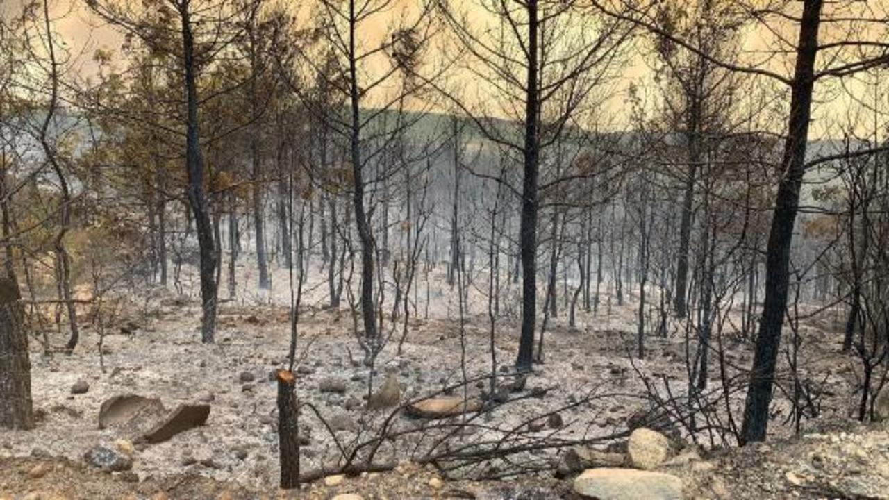 Wildfires in southern Turkey leave four dead