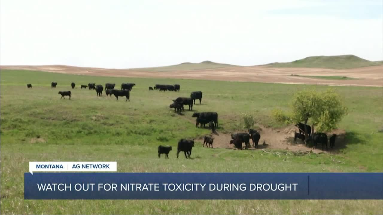 Montana Ag Report II 8-2-21