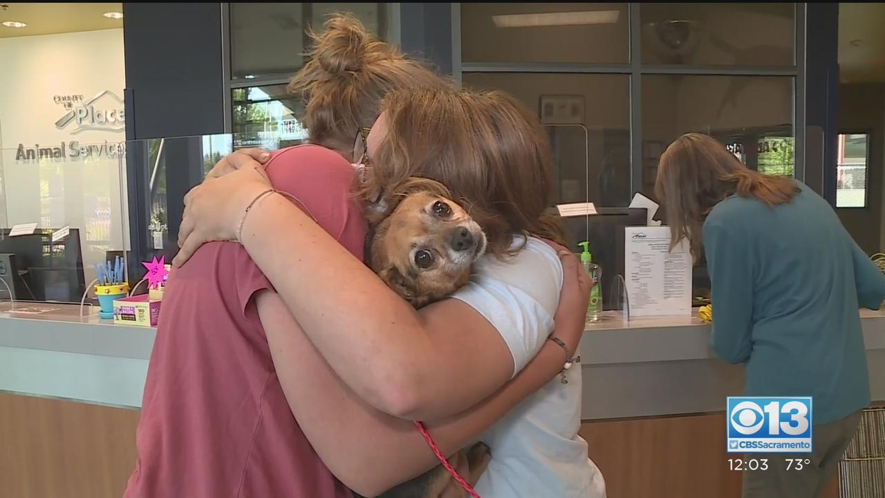 Dog That Survived Camp Fire In Paradise Rescued After River Fire