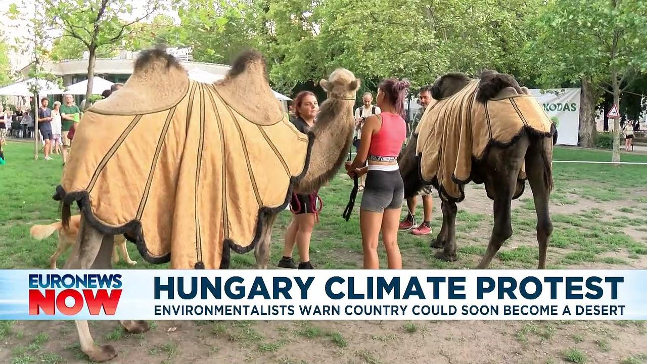 'Hungary could become a desert', climate activists warn as they bring camels to Budapest