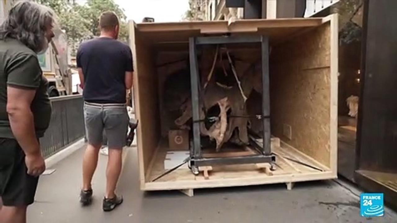 Meet 'Big John': World's biggest triceratops on sale in Paris