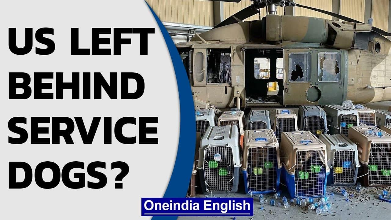 US abandoned its service dogs in Afghanistan? Pentagon official says this...  Oneindia News