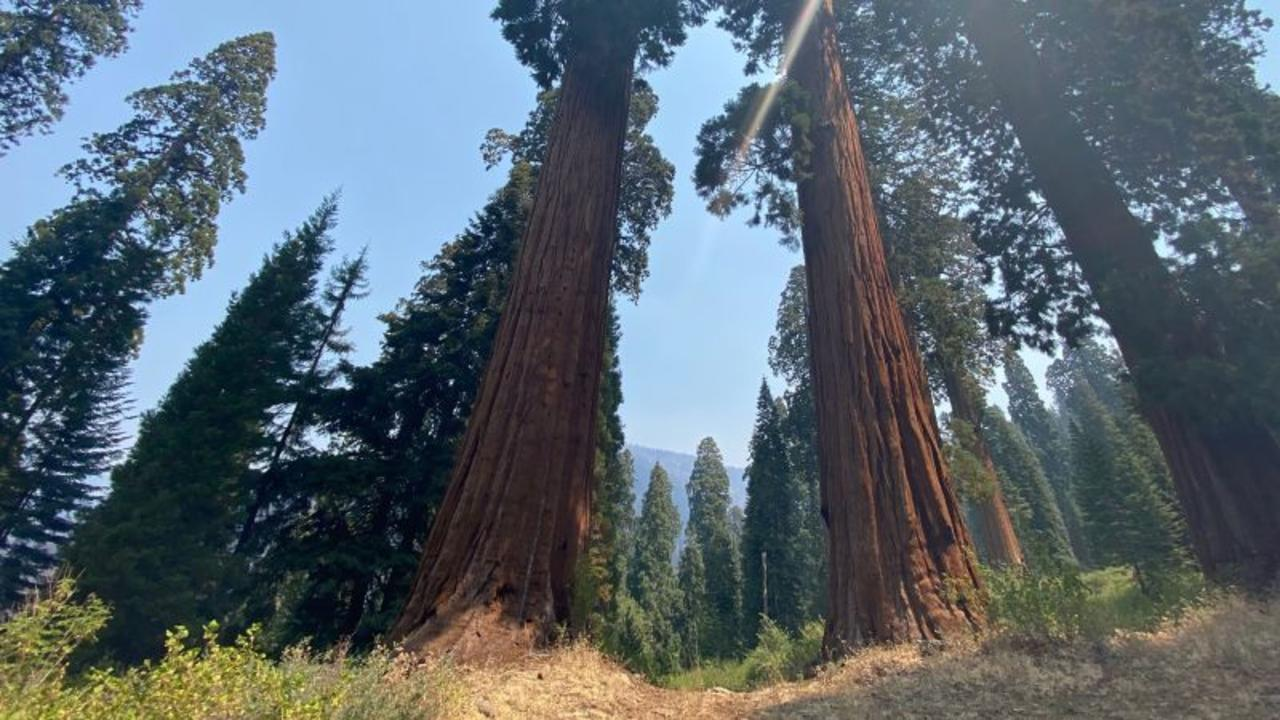 Climate change could wipe out iconic California landmarks