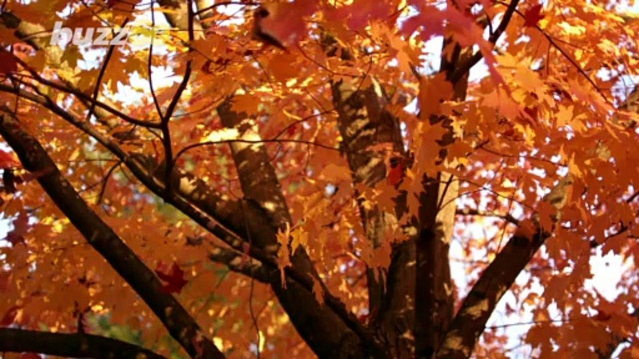 Some Simple Ways You Recharge After Fun-Filled Autumn Activities