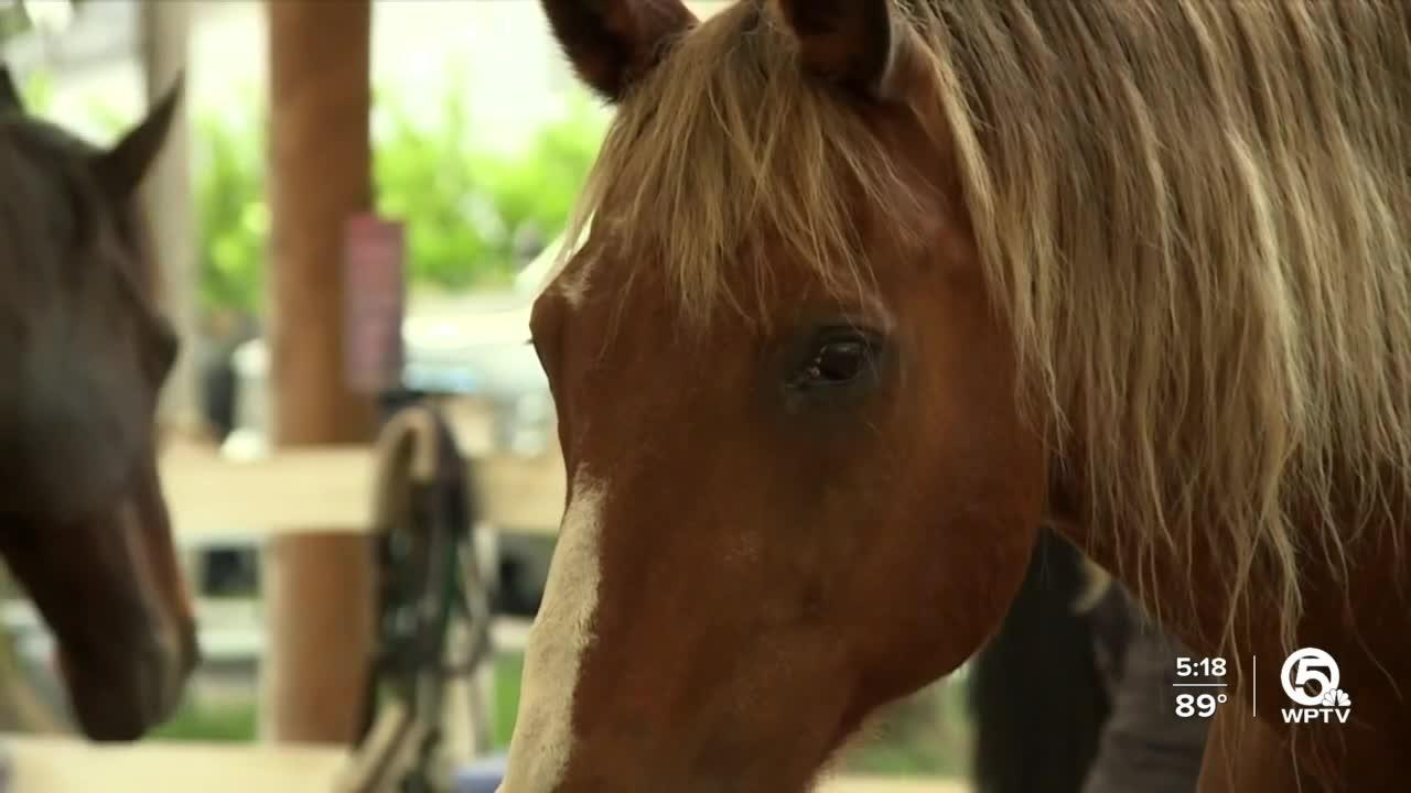Adults with disabilities take part in Delray Beach equine therapy