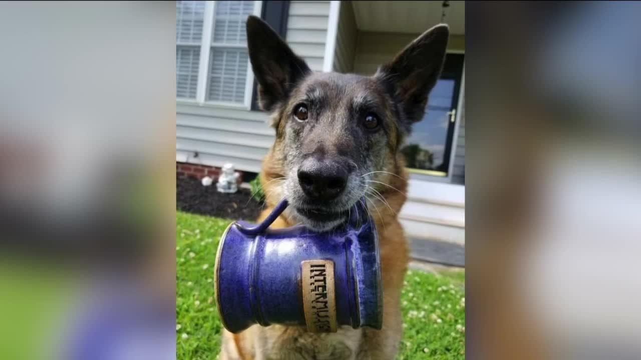 Brewery hosts Dog Days event to benefit Henrico Humane Society