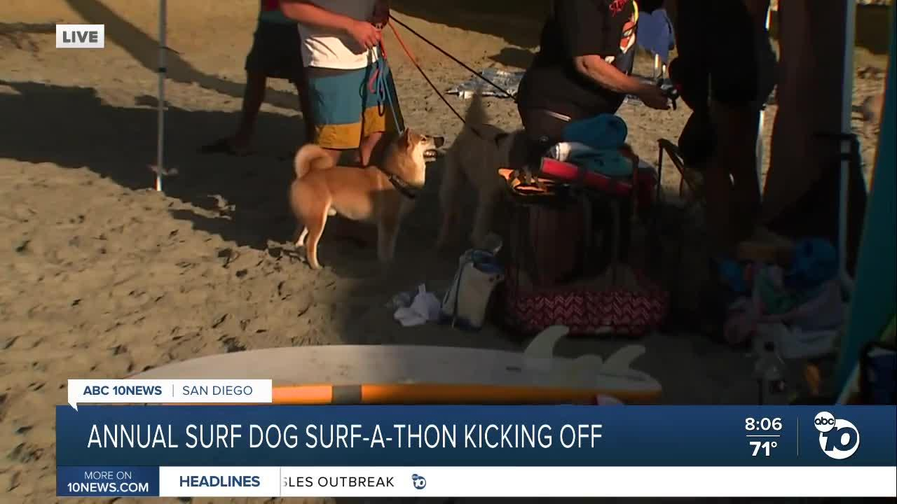 Annual Surf Dog Surf-a-Thon kicks off today