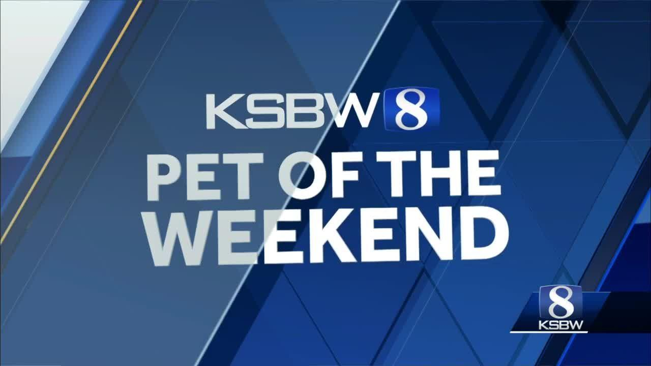 KSBW Pets of the Weekend